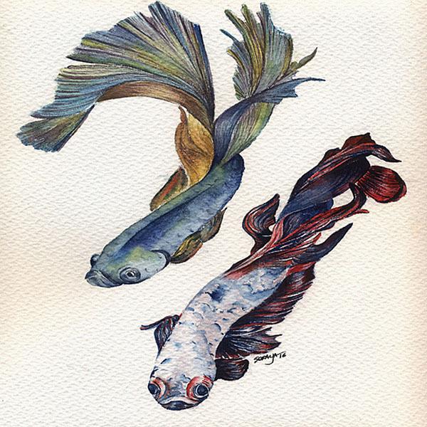 385031_soraya-pamplona-aquarela-peixe-betta-600-04
