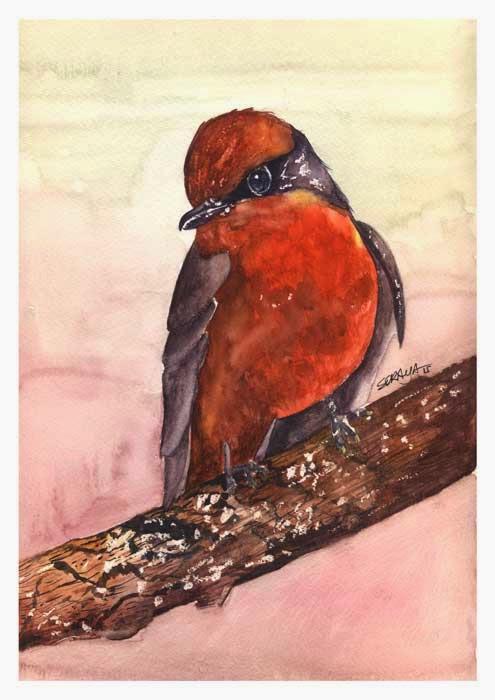 422692_aquarela-passarinho-vermelho-web